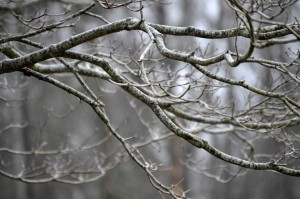 tree branches that are eerily beautiful