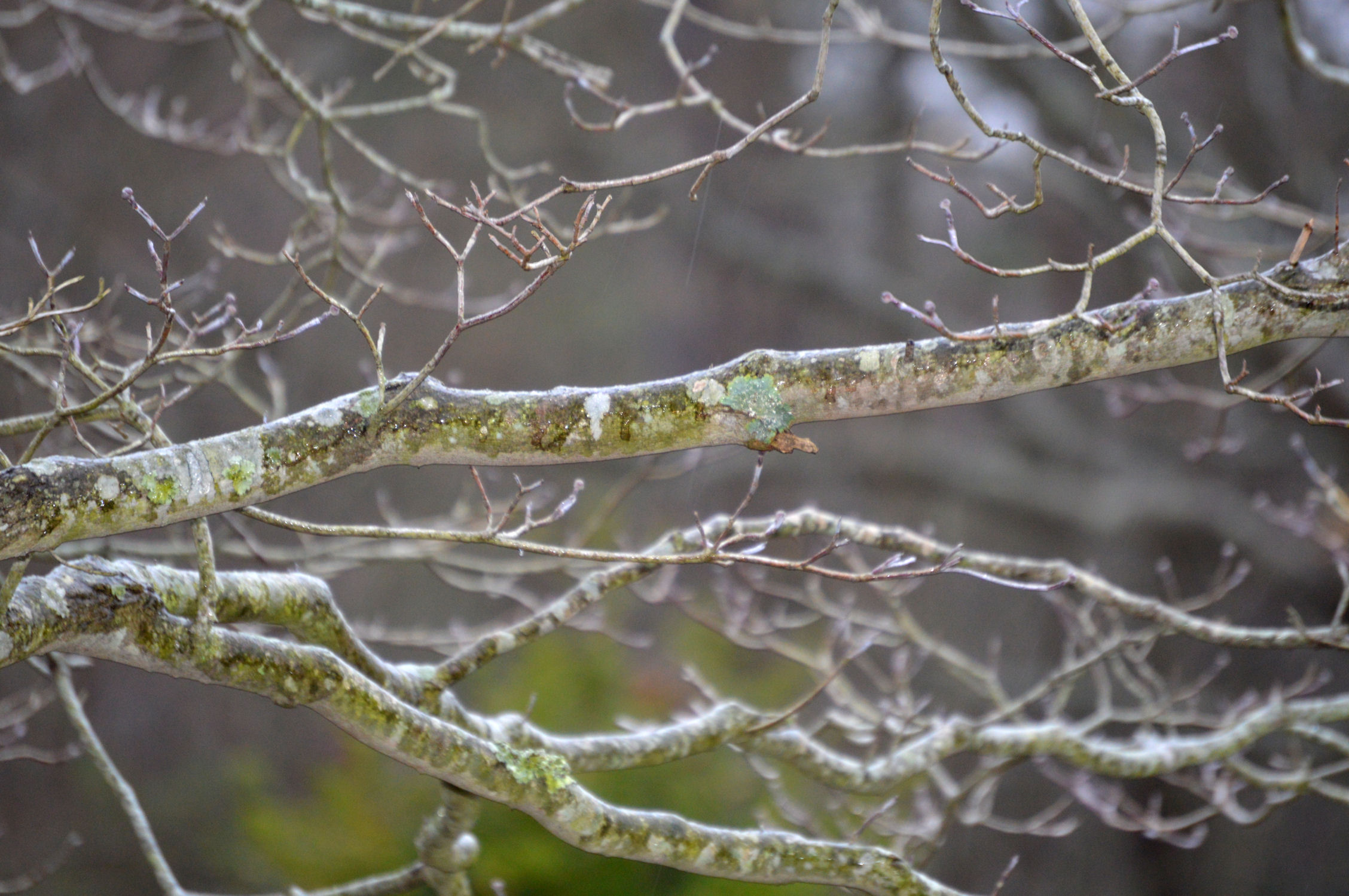 Moss on a branch